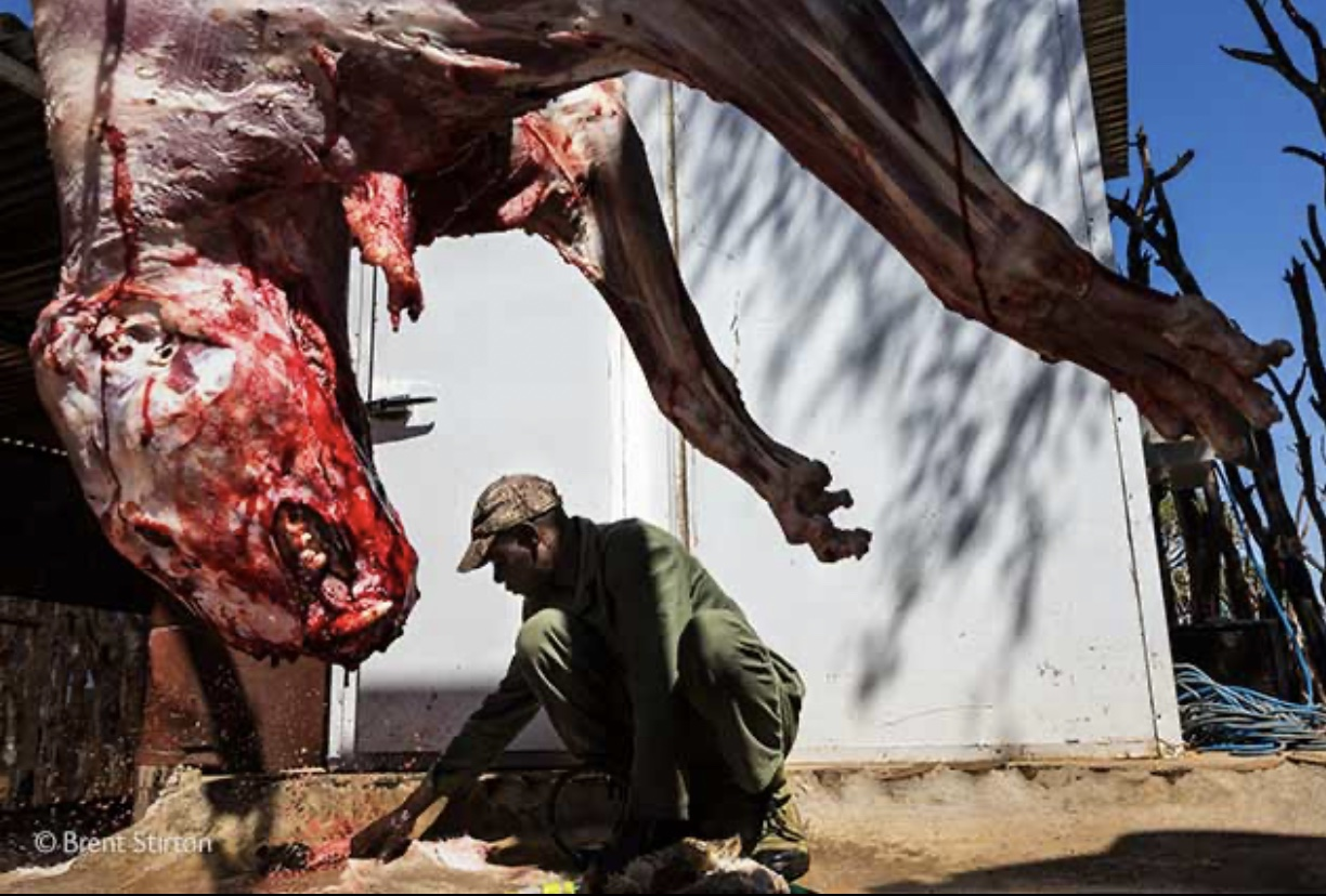 Corona Virus - South Africa Lion Bone Trade - Brent Stirton Photojournalist of the Year South Africa